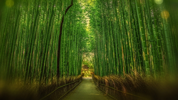 Bamboo Scrim